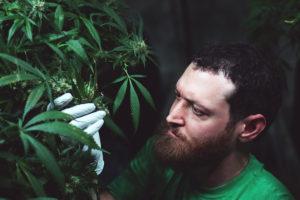 craft cannabis
