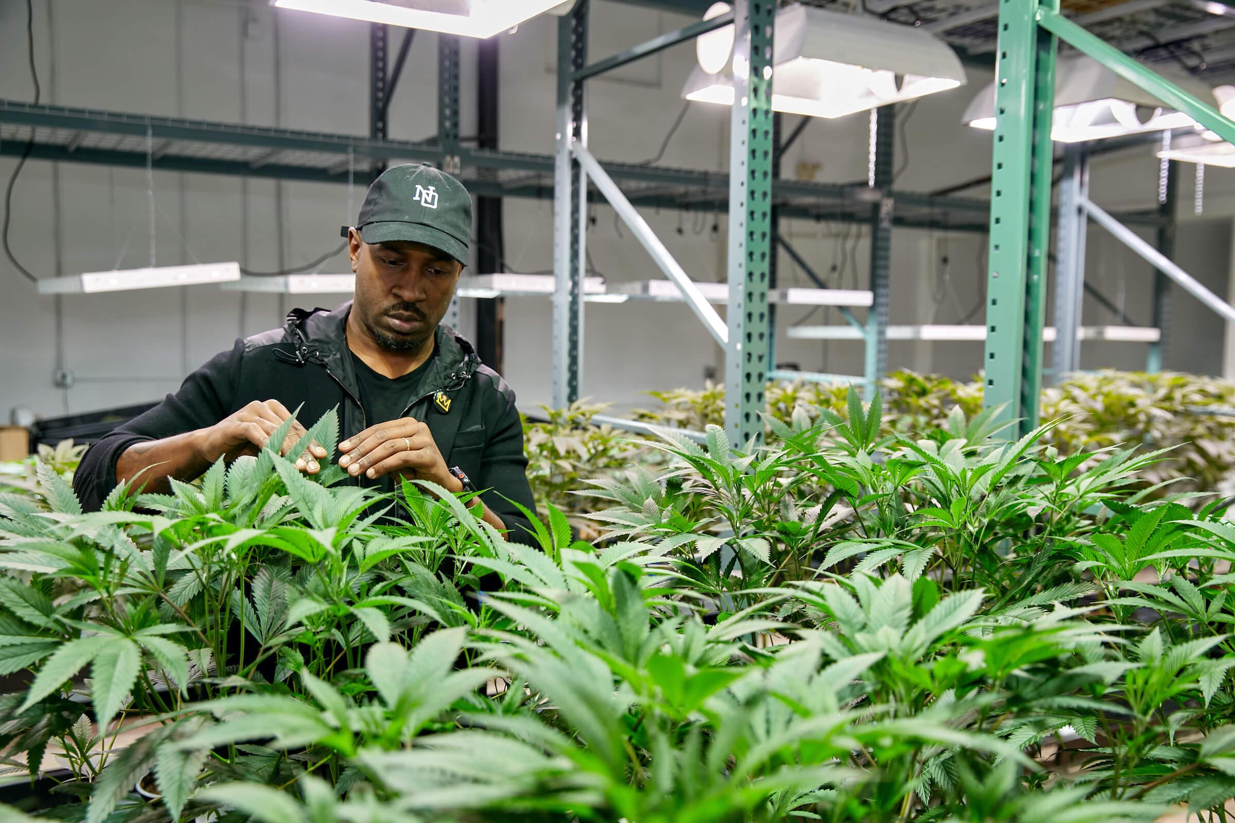 LOWD Craft Cannabis
